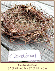 "Cardinal's Nest, 3"" (7.62 cm) high by 3"" (7.62 cm) wide."