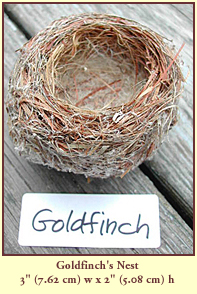 "Goldfinch's Nest, 3"" (7.62 cm) wide by 2"" (5.08 cm) tall."