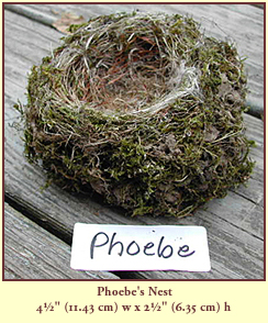 "Phoebe's Nest, 4½"" (11.43 cm) wide by 2½"" (6.35 cm) tall."