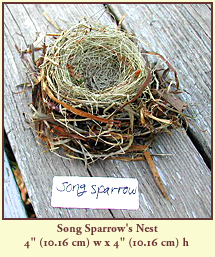 "Song Sparrow's Nest, 4"" (10.16 cm) wide by 4"" (10.16 cm) tall."